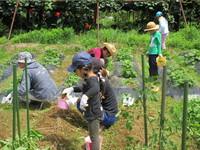 畑の手入れと葉生姜の収穫を行いました!
