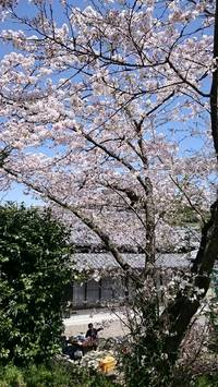 お花見に行ってきました 島田市