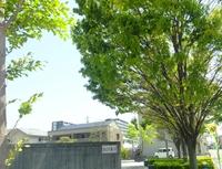 月に一度の島田市おび通り散歩。