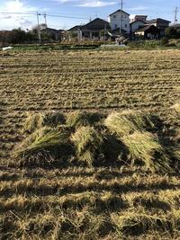 稲刈り終了!