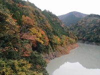 【再募集】奥大井の自然満喫SUP体験