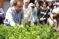 雅正庵のお茶摘みツアー、今年もやります!