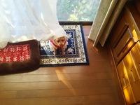 我が家の愛犬・・・