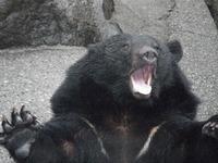 くっ、熊?