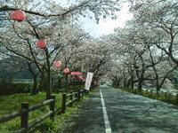 桜満開・イベントもあります♪